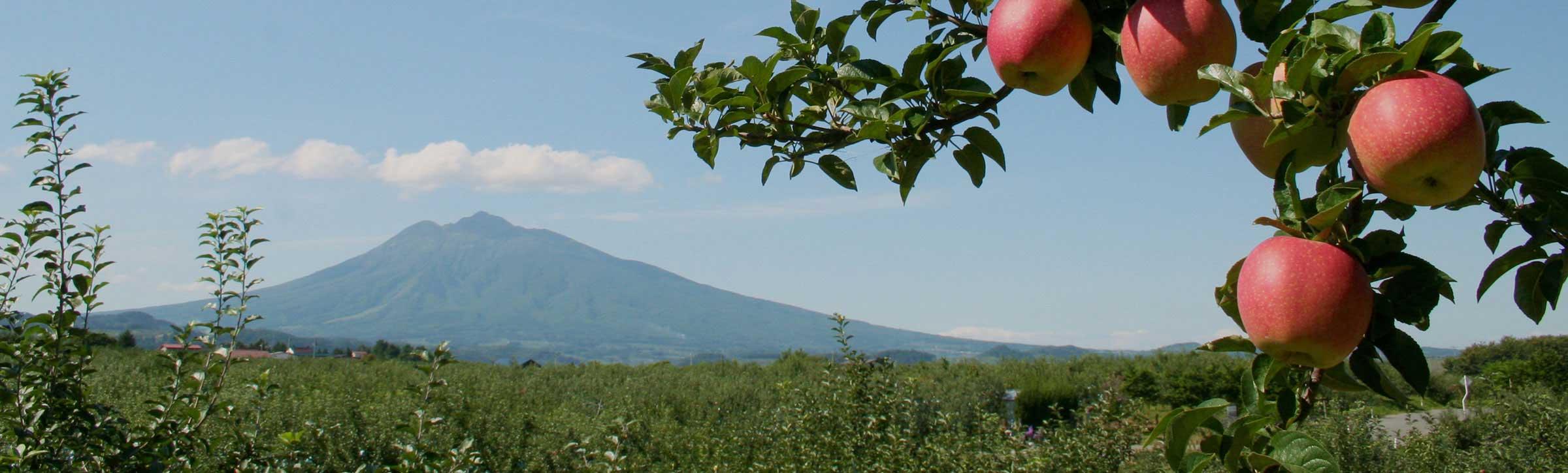 地域ごとに特色のある山の幸、三方囲まれた海から水揚げされる多種の水産物 青森りんご畑